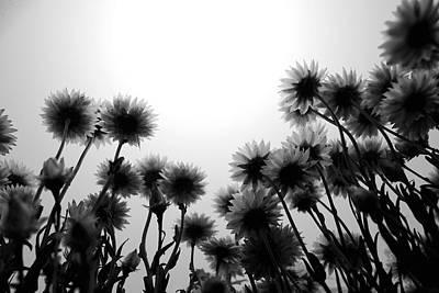Monochrome Photograph - Flowers Standing Tall by Sumit Mehndiratta