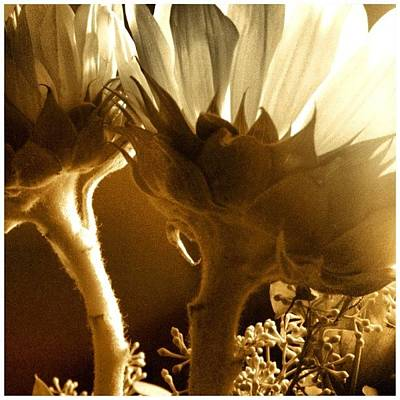 Sunflowers Wall Art - Photograph - #flowers #sunlight #justbecause by Lucy Siciliano