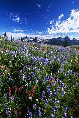 Open Mind Photograph - Flowers With Tattosh Mountains, Mt by Natural Selection Craig Tuttle