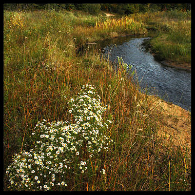Beauty Photograph - Flowing Daisy Flowing Creek by LeeAnn McLaneGoetz McLaneGoetzStudioLLCcom