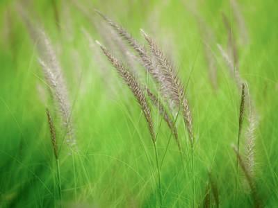 Flowing Reeds Art Print