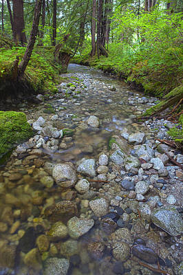 Prints Of Alaska Photograph - Flowing Through The Forest by Tim Grams