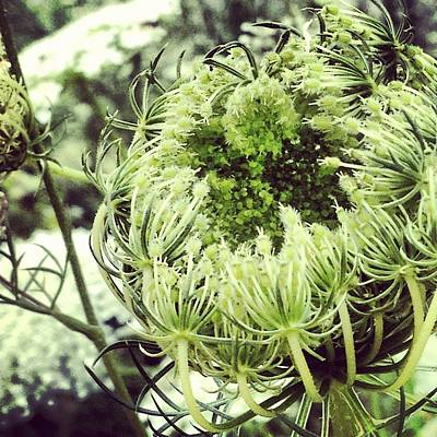Photograph - Fluffy Flower by Lora Mercado