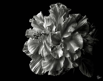 Photograph - Fluffy Hibiscus In Black And White by Endre Balogh