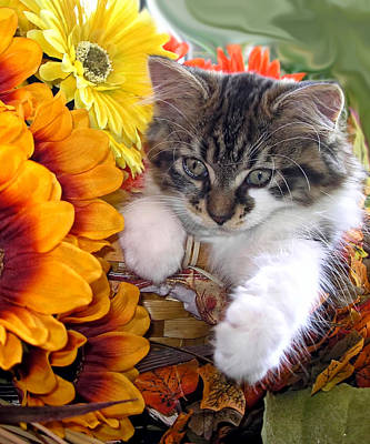 Fluffy Kitten Staring At A Mouse - Cute Kitty Cat In Fall Autumn Colours With Gerbera Flowers Art Print by Chantal PhotoPix