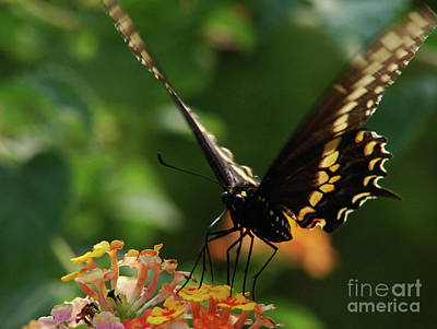 Photograph - Flutter By by Mark Holbrook