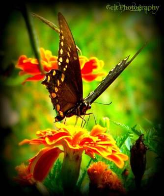 Photograph - Flutterbye by Michelle Guilzon