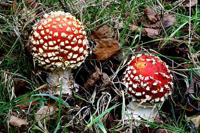 Fly Agaric Fungi Art Print by Dr Keith Wheeler