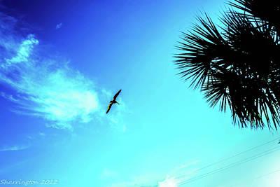 Photograph - Fly Away by Shannon Harrington