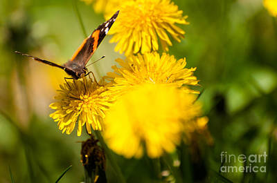 Photograph - Fly Away With Me by Venura Herath