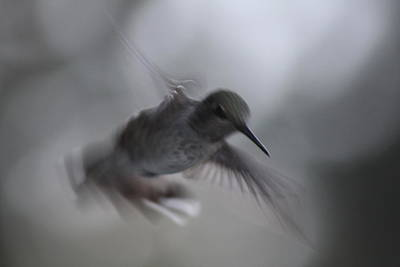 Photograph - Fly By by Cathie Douglas