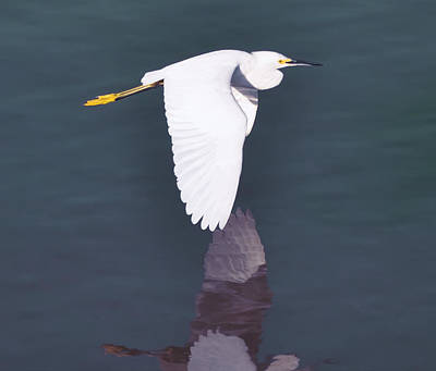 Egret Photograph - Fly Egret Fly by Bill Cannon