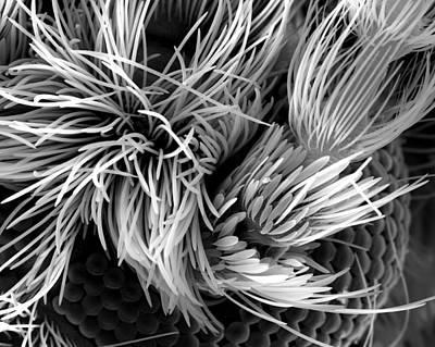 Sem Digital Art - Fly Hair  by Sheri  Neva