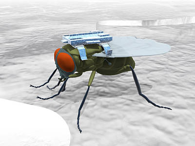 Fly With Microchip Art Print by Christian Darkin