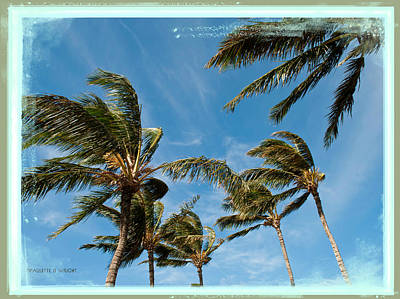 Photograph - Flyaway Palms by Paulette B Wright