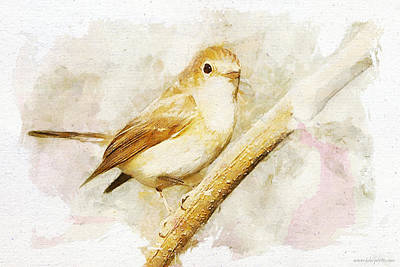 Flycatcher Mixed Media - Flycatcher Branch by Kolor Palette