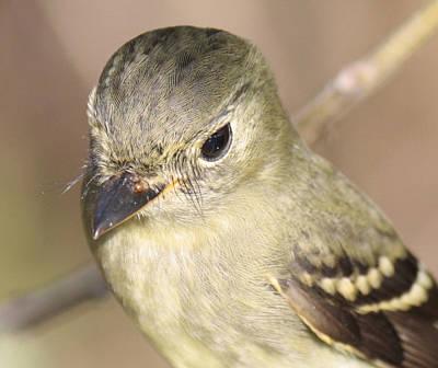 Photograph - Flycatchers Beak by Roena King
