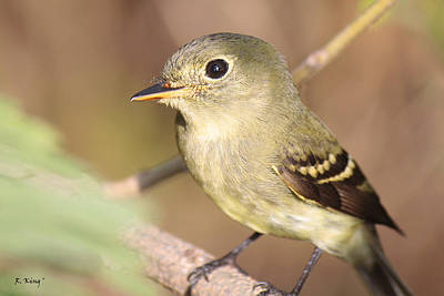 Photograph - Flycatcher's Whiskers by Roena King