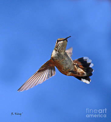 Photograph - Flying Backwards - No Problem by Roena King