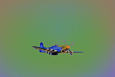 Photograph - Flying Colors by Karol Livote