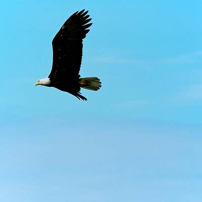 Photograph - Flying High by Eric Tressler