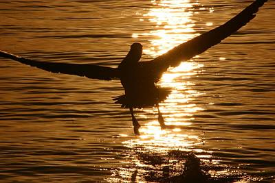 Photograph - Flying Into The Sunset by Andrea Linquanti