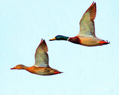 Bif Digital Art - Flying Mallards by Wingsdomain Art and Photography