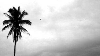 Flying-off From Palm Tree Art Print by Rosvin Des Bouillons
