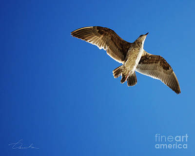 Flying Over Art Print by Danuta Bennett