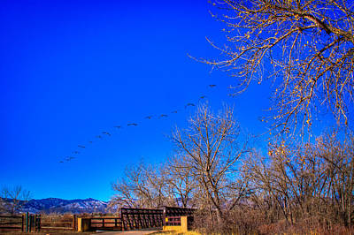 Nature Photograph - Flying Over South Platte Park by David Patterson