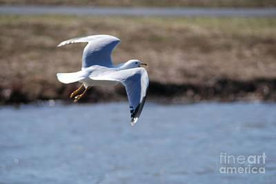 Flying Seagull Art Print by Mark McReynolds
