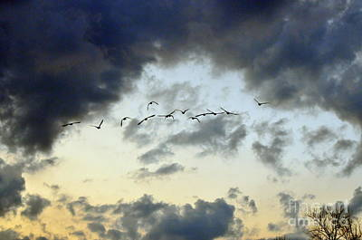 Flock Of Bird Photograph - Flying South For The Winter by Paul Ward