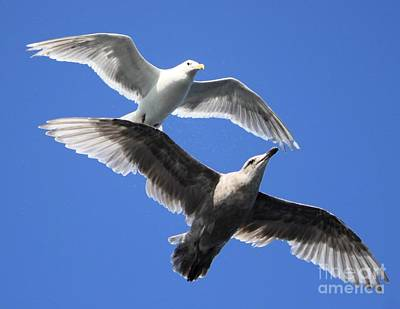 Photograph - Flying Tandem by Terri Thompson