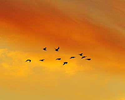 Flying To The Roost Art Print by Tony Beck