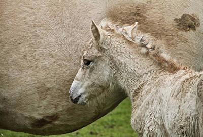 Foal Art Print by Odd Jeppesen