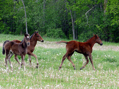 Mixed Media - Foals In Dandelions by Bruce Ritchie
