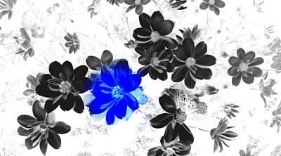 Focal Black And White Beauty Art Print by Kim Galluzzo Wozniak