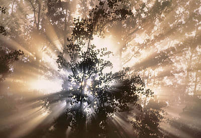 Of Gods Sunshine Photograph - Fog And Light Beams In Aspen Forest by Darwin Wiggett