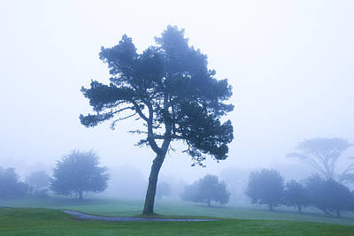 Bleached Tree Photograph - Fog And Trees, Presidio, San Francisco, California, Usa by Jose Luis Stephens