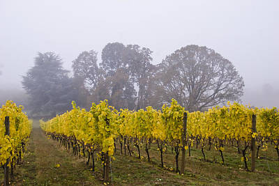 Grape Leaves Photograph - Fog In The Fall by Jean Noren