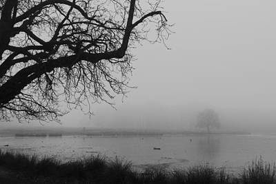 Photograph - Fog In The Park by Maj Seda