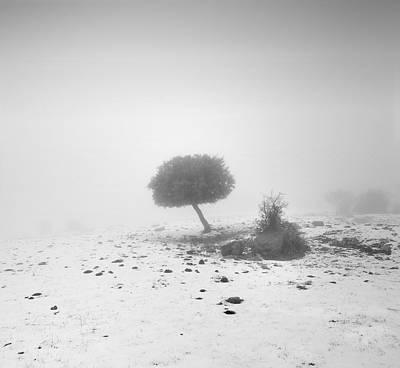 Fog Tree Art Print by Guido Montanes Castillo