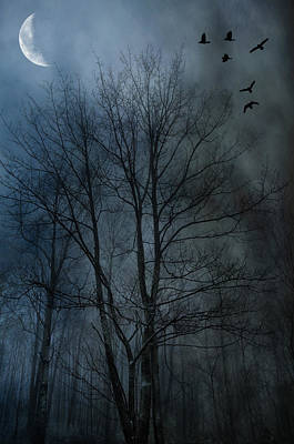 Photograph - Foggy Crows by Emily Stauring