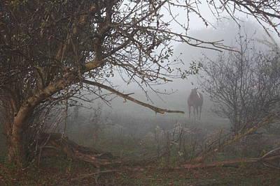 Foggy Horse Art Print