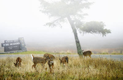 Big Meadows Photograph - Foggy Meadows by Kathy Jennings