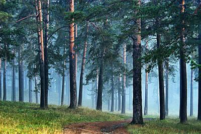 Photograph - Foggy Morning 10 by Vladimir Kholostykh