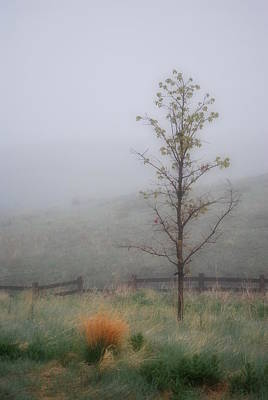 Foggy Morning Art Print by Amee Cave