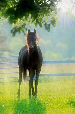 Photograph - Foggy Morning Colt by Emily Stauring