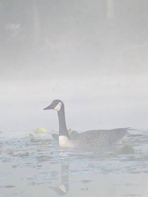 Foggy Morning Goose Art Print by Gerald Strine