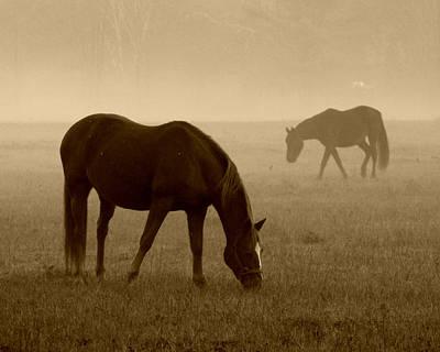 Photograph - Foggy Morning Horses 017 by Mark J Seefeldt